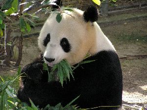 China Imbiss Panda mit Taxi Service und leckeren Essen in Remscheid.